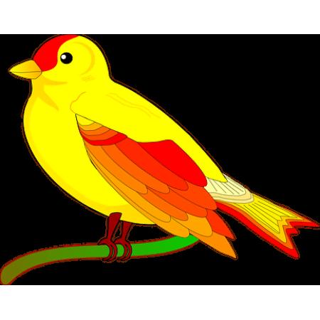 achat doiseaux en ligne achat oiseaux en ligne vente de perroquets perrruches. Black Bedroom Furniture Sets. Home Design Ideas