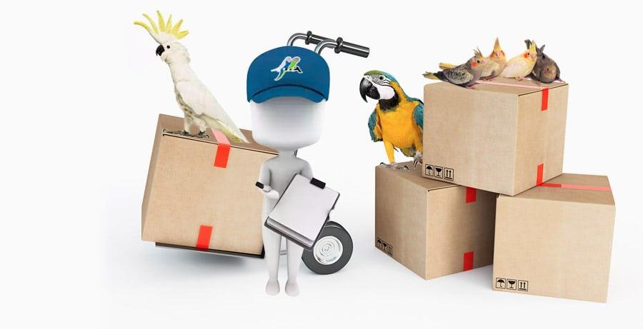Achat oiseaux en ligne vente de perroquets, perrruches, oiseaux Exotiques 3950406ff77a